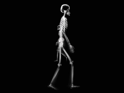 people walking - human skeleton stock videos and b-roll footage