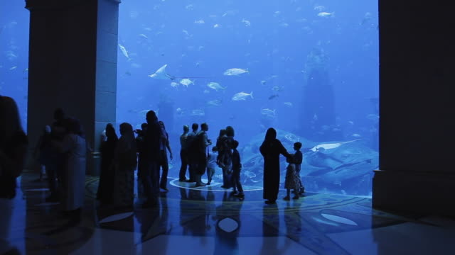 vídeos y material grabado en eventos de stock de ws people watching fishes at atlantis hotel aquarium / dubai, united arab emirates - atlantis