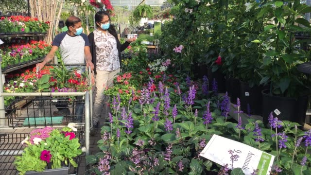 vídeos y material grabado en eventos de stock de people wearing face masks to protect them from the novel coronavirus while shopping for flowers and plants at a garden centre during the spring... - ontario canadá