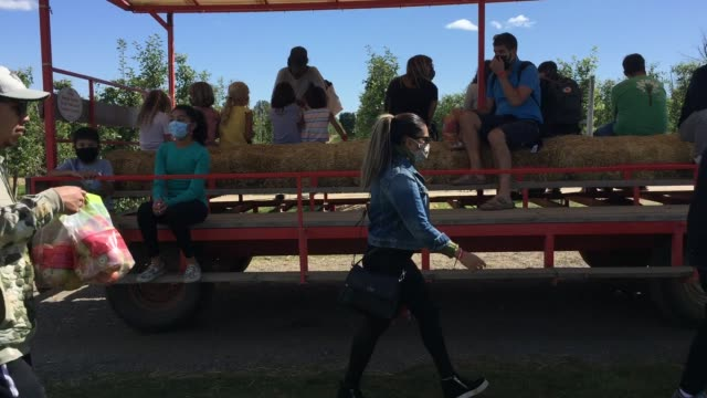 people wearing face masks to protect them from the novel coronavirus during a hay ride through an apple orchard in milton ontario canada - hay ride stock videos & royalty-free footage