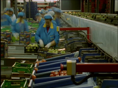 people work in tomato processing plant spain - belt stock videos & royalty-free footage