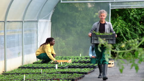 people working in a greenhouse - organic farm stock videos & royalty-free footage