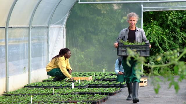 温室で働く人 - フローリスト点の映像素材/bロール