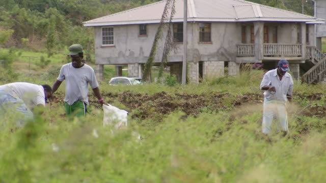 WS PAN People working in the filed  / Brightown, Barbados
