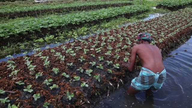 people working in the floating garden in bangladesh bangladesh's annual monsoon rainfalls submerge lowland areas for months on end but in the rural... - hyacinth stock videos & royalty-free footage