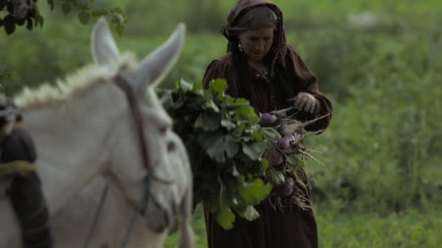people working on farm, cairo - donkey stock videos & royalty-free footage