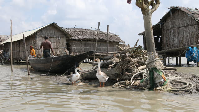 people's lifestyle in hanging village in the coastal area of bangladesh on september 04, 2020. coastal village kalabogi at the bank of the river... - exklusiv stock-videos und b-roll-filmmaterial