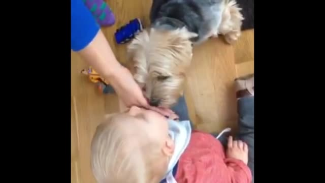 pepper and leo are the very best of friends! check them out in this heartwarming clip! there is nothing more heartwarming and contagious then a... - hand on heart stock videos & royalty-free footage