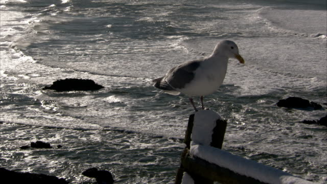 a perched seagull flies off a post on the oregon coast. available in hd. - oregon coast stock videos & royalty-free footage