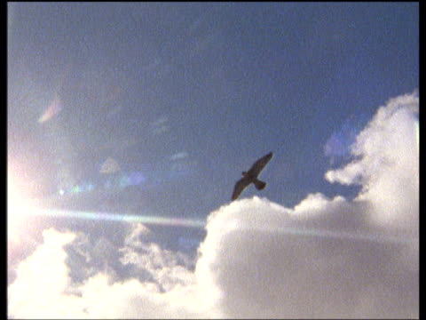 peregrine falcon flies against blue sky, fluffy white clouds and sun - wanderfalke stock-videos und b-roll-filmmaterial