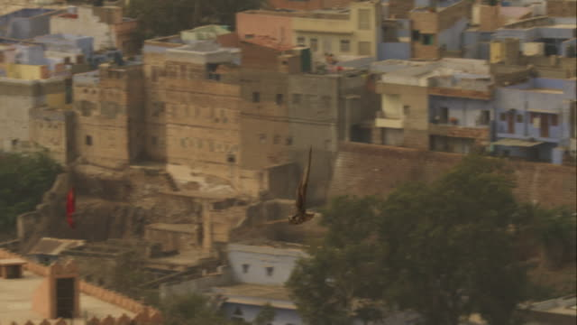 peregrine falcon flying and gliding over houses in jodhpur - wanderfalke stock-videos und b-roll-filmmaterial