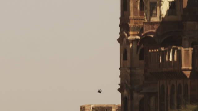 ws peregrine falcon goes into vertical dive by fort walls and over open ground in jodhpur - wanderfalke stock-videos und b-roll-filmmaterial