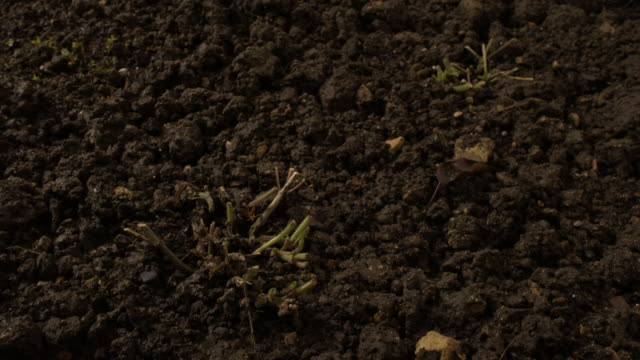 perennial plants sprout from the earth. available in hd. - seedling stock videos & royalty-free footage