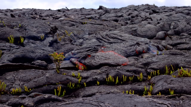 perfect mesmerizing lava flow destroys metrosideros polymorpha ohi'a lehua timelapse day daytime glowing hot flow from kilauea active volcano puu oo vent active volcano magma - kilauea stock videos & royalty-free footage