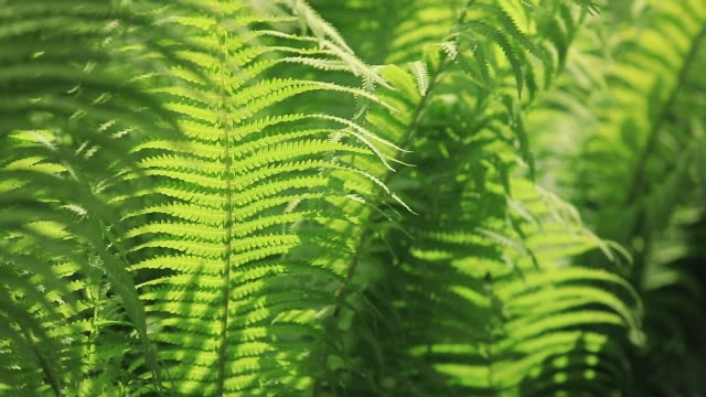 perfect natural fern pattern. beautiful background made with young green fern leaves - blattfiedern stock-videos und b-roll-filmmaterial
