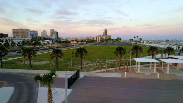 perfect row fo palm trees at new public park in corpus christi , texas , usa aerial drone view at sunset during golden hour - southwest florida stock videos & royalty-free footage