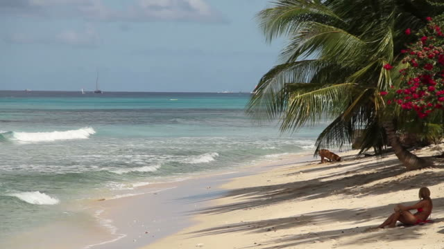 A perfect view of a dog and a woman on a beach in Barbados