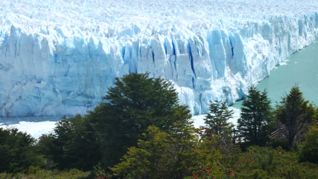 perito moreno glacier front with trees in front - argentina stock videos & royalty-free footage