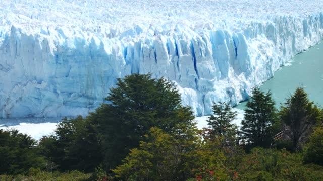 stockvideo's en b-roll-footage met perito moreno gletsjer front met bomen vooraan - argentina