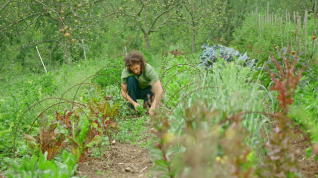 permaculture gardener weeding the garden with his hands - pulling stock videos & royalty-free footage