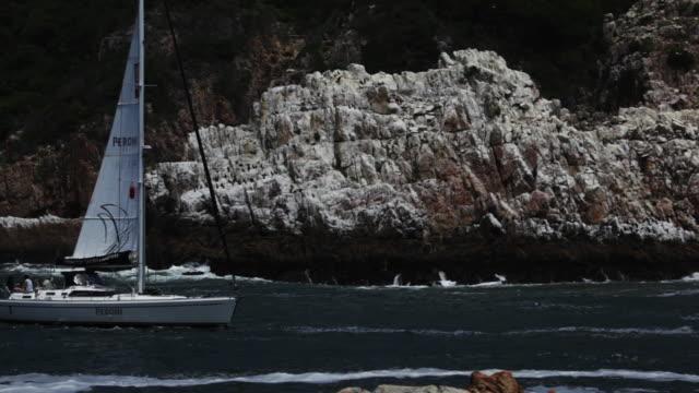 peroni' catamaran sails across frame. - aquatic organism stock videos & royalty-free footage