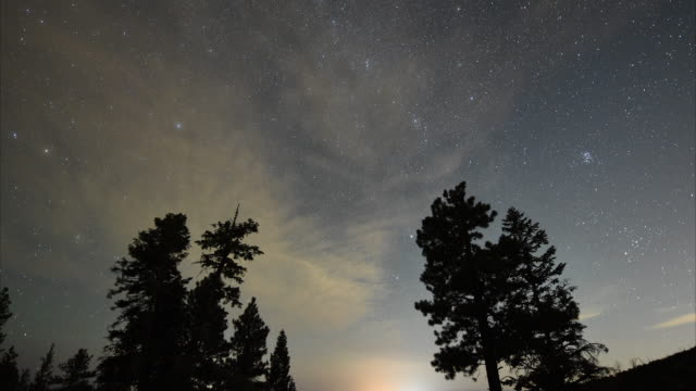 A Perseid meteor streaks across the sky above desert pine trees on August 13 2015 in the Spring Mountains National Recreation Area Nevada The annual...