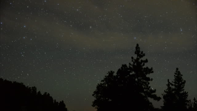 vídeos de stock, filmes e b-roll de a perseid meteor streaks across the sky above desert pine trees on august 13 2015 in the spring mountains national recreation area nevada the annual... - chuva de meteoros