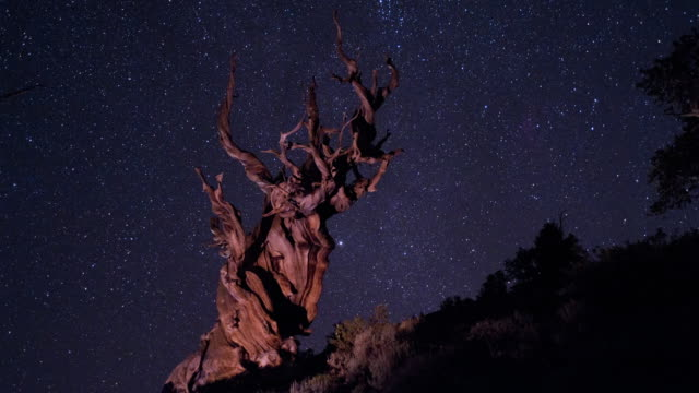 vídeos de stock, filmes e b-roll de perseid meteors shower over an ancient bristlecone pine, white mountains, ca. - chuva de meteoros