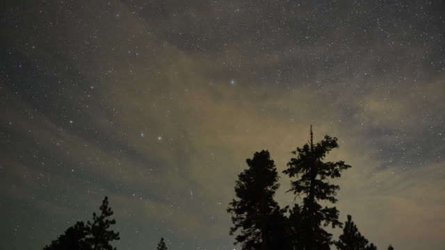 Perseid meteors streak across the sky above desert pine trees on August 13 2015 in the Spring Mountains National Recreation Area Nevada The annual...