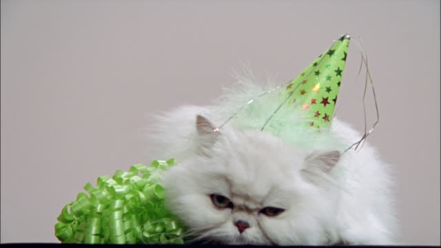 persian cat in studio wearing party hat - party hat stock videos & royalty-free footage