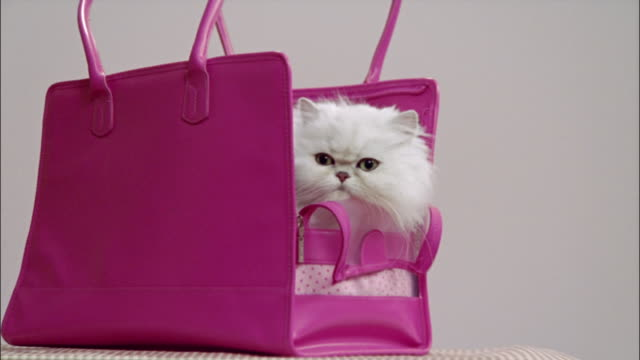 persian cat inside pink shoulder bag carrier - gabbietta per animali video stock e b–roll