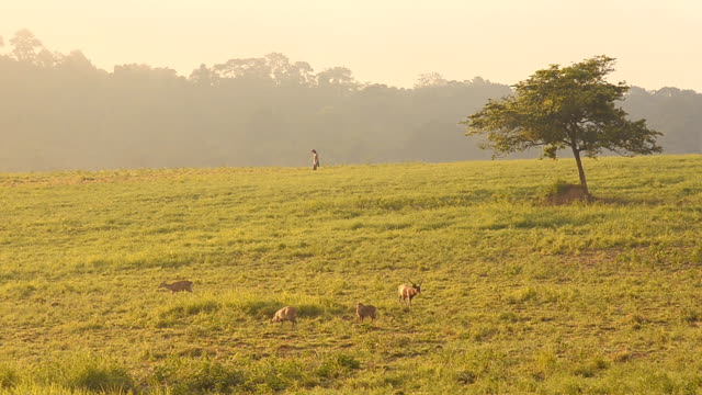 person and deer on grassland reserve. - deer family stock videos and b-roll footage