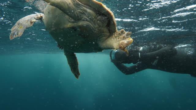 person filming loggerhead sea turtle swimming in ocean, reptile moving in blue sea - azores, portugal - loggerhead sea turtle stock videos & royalty-free footage