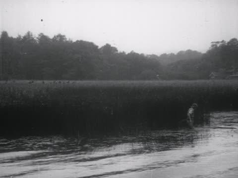 vídeos y material grabado en eventos de stock de a person gathers reeds from the shoreline of lake windermere for the annual rushbearing festival - distrito de los lagos de inglaterra