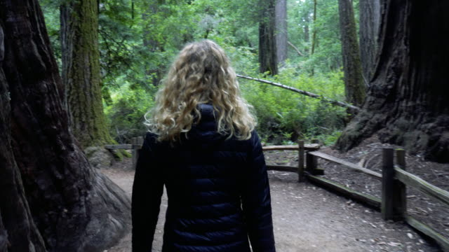 person hiking on trail in the redwood forest - santa cruz california stock videos and b-roll footage