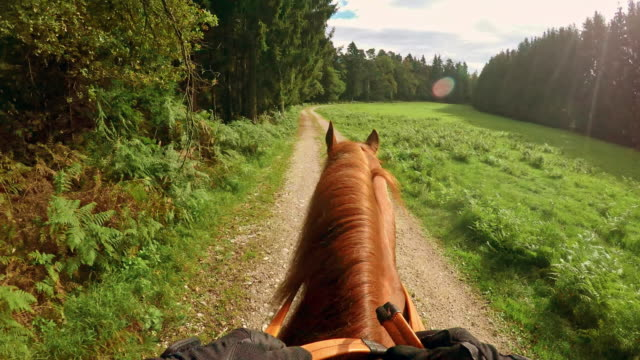 pov person horseback riding through forest clearance - recreational horse riding stock videos and b-roll footage