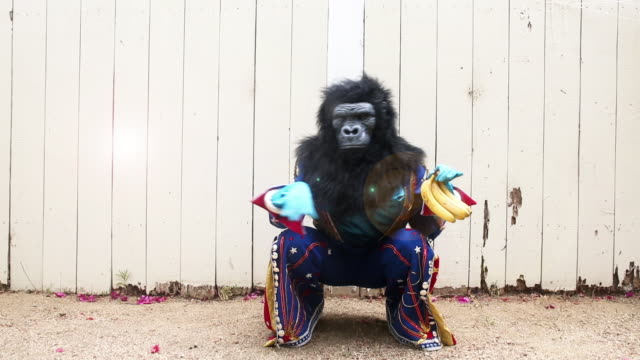 person in gorilla costume dancing with bananas - stage costume stock videos & royalty-free footage