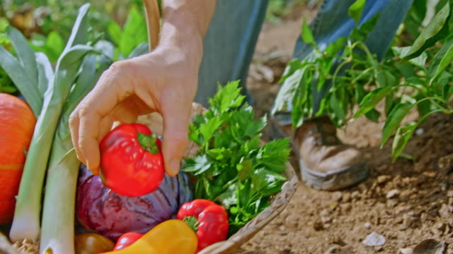 slo mo person placing harvested produce into a basket in the garden - vegetable garden stock videos & royalty-free footage