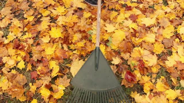 person raking leaves - portland oregon fall stock videos & royalty-free footage