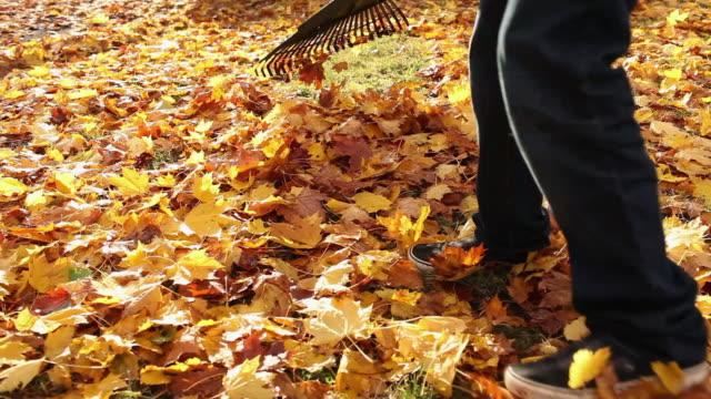 vídeos de stock e filmes b-roll de person raking leaves - ancinho equipamento de jardinagem