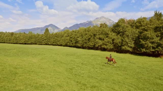 vídeos de stock, filmes e b-roll de pessoa aérea que monta um cavalo através de um prado da montanha - montar um animal