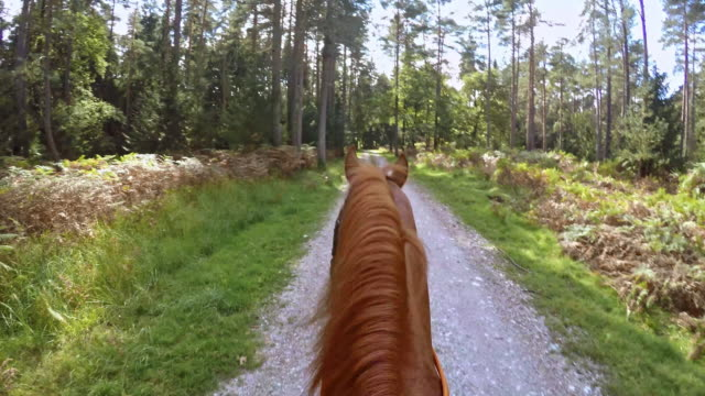 pov person riding a horse through forest - horseback riding stock videos & royalty-free footage