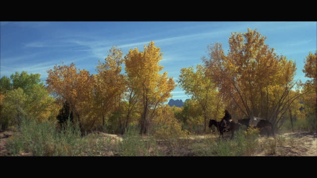 ws person riding on horse through golden aspen trees - aspen tree stock videos & royalty-free footage
