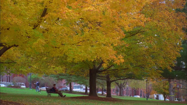 Person sitting on bench under golden leafed tree on campus grounds, Vermont Available in HD.