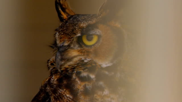stockvideo's en b-roll-footage met person touching owls beack, close up - uil