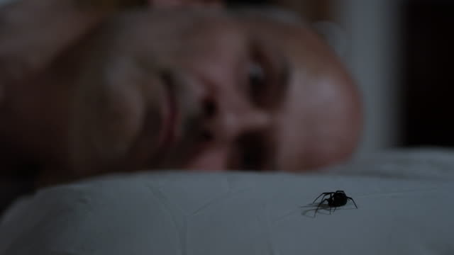 vídeos de stock, filmes e b-roll de person wakes up with black widow spider on his pillow - artrópode