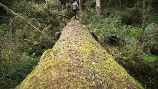 person walks over fallen tree in woods - 35 39 jahre stock-videos und b-roll-filmmaterial