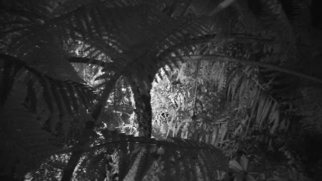 vídeos y material grabado en eventos de stock de person walks through jungle at night wearing head torch. - java