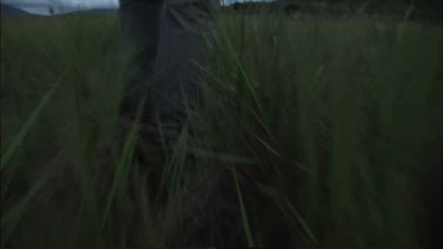 a person wearing jeans walks through tall grass. - tall person stock videos and b-roll footage