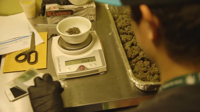 person weighs and packages marijuana, over the shoulder - marijuana cannabis video stock e b–roll